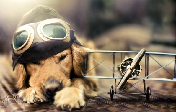 service dog, travel, how to, need, documents, fly, dog, ID, letter, doctor